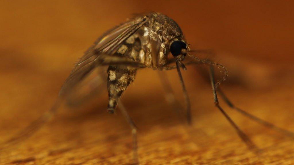 Close up of mosquito biting someone