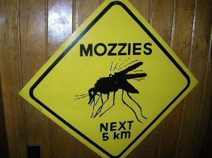 mozzie warning sign