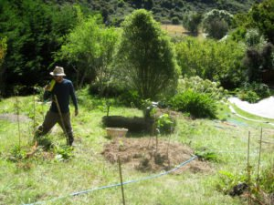 Man on WWOOF planting on farm